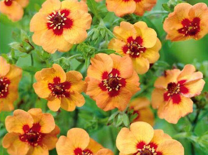 5 fleurs pas ch res planter en hiver elle d coration. Black Bedroom Furniture Sets. Home Design Ideas