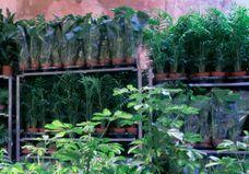 Plantes à 2 € : le super plan parisien pour une fin d'année so green