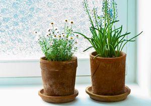 Quelle exposition pour ma plante d'intérieur ?