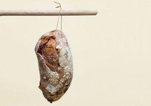 Dégustez le pain au Beaujolais nouveau chez Arnaud Delmontel