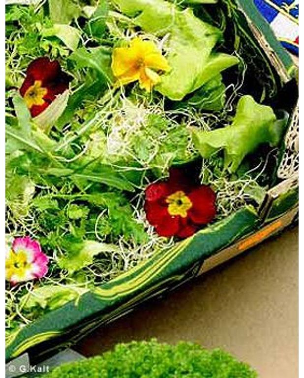 salade verte aux capucines et aux pousses germ es pour 1 personne recettes elle table. Black Bedroom Furniture Sets. Home Design Ideas