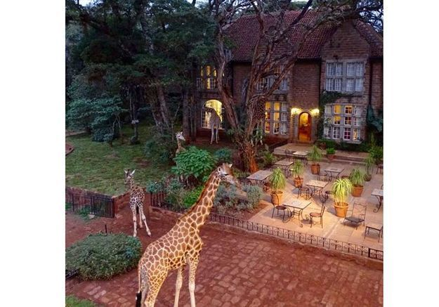 9 hôtels insolites pour mieux approcher les animaux
