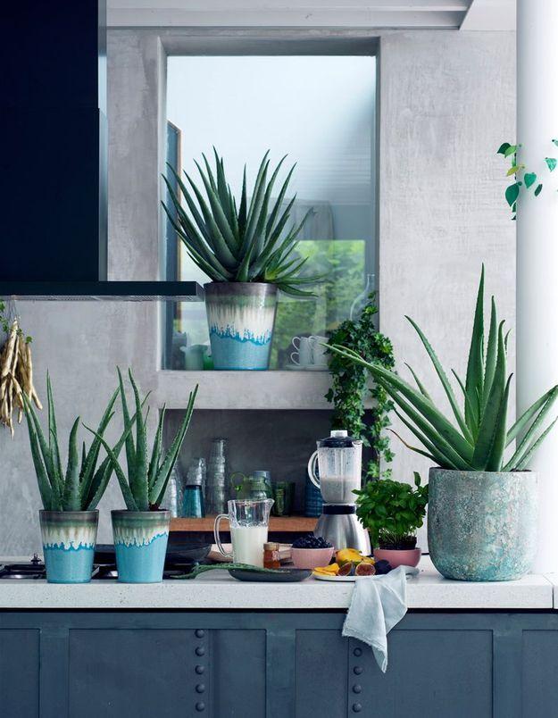 Zoom sur une plante r solument bienfaisante l aloe vera for Plante exotique exterieur rustique