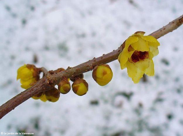 Quelles plantes et fleurs pour un jardin d'hiver fleuri ?