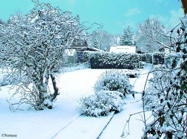 Pr parez votre jardin affronter l 39 hiver elle d coration for Jardin hiver plantation