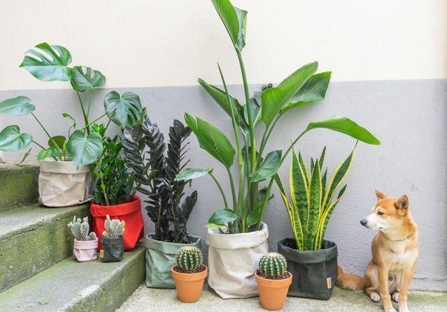 Adoptez de belles plantes avec aKagreen