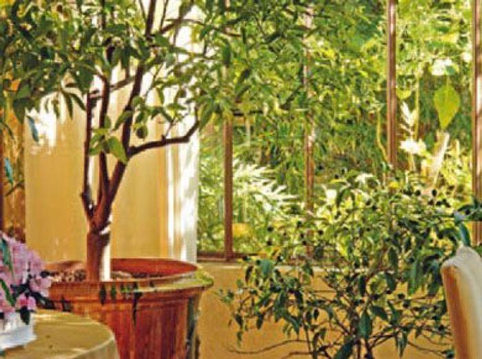 Emejing decoration jardin d hiver ideas for Decoration jardin d hiver