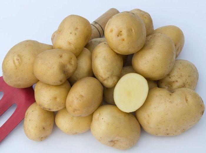 Les pommes de terre bintje