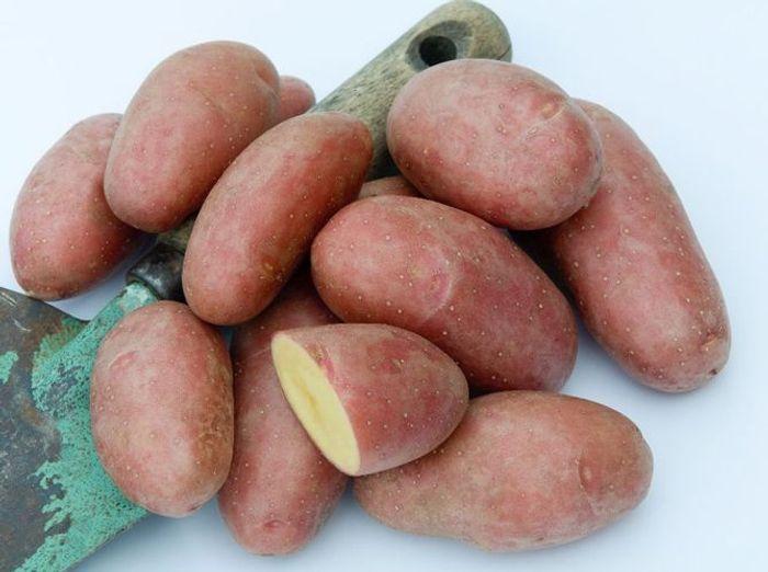 Les pommes de terre Roseval