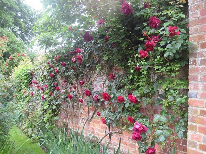 Visite d un jardin anglais dans la campagne britannique for Exterieur anglais