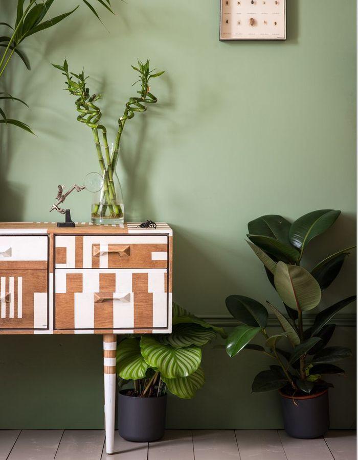 Multipliez les plantes vertes
