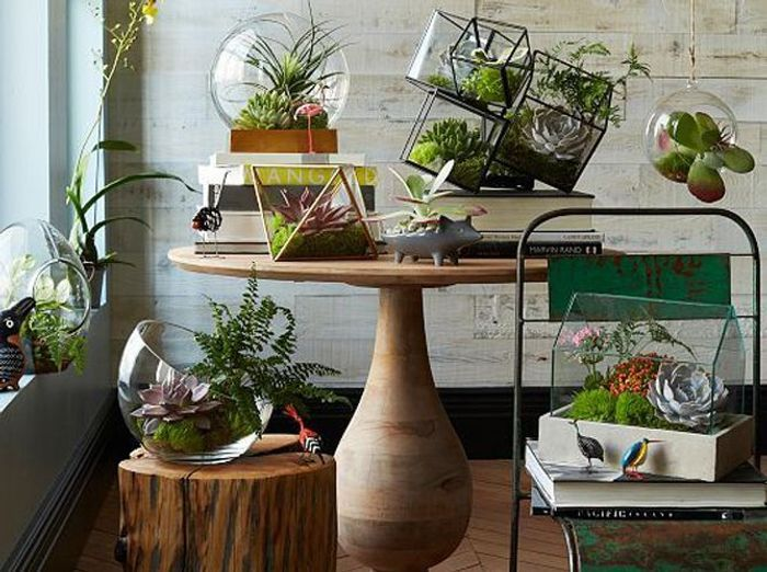 terrariums d couvrez ces mini serres ultra d co elle d coration. Black Bedroom Furniture Sets. Home Design Ideas