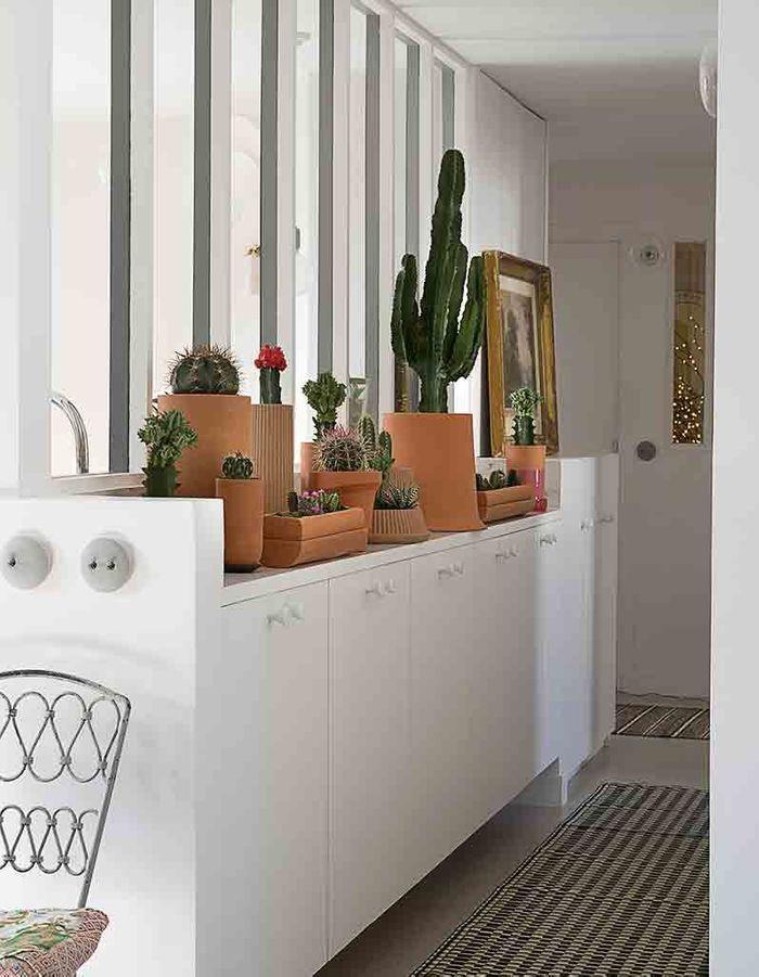 Une serre de cactus