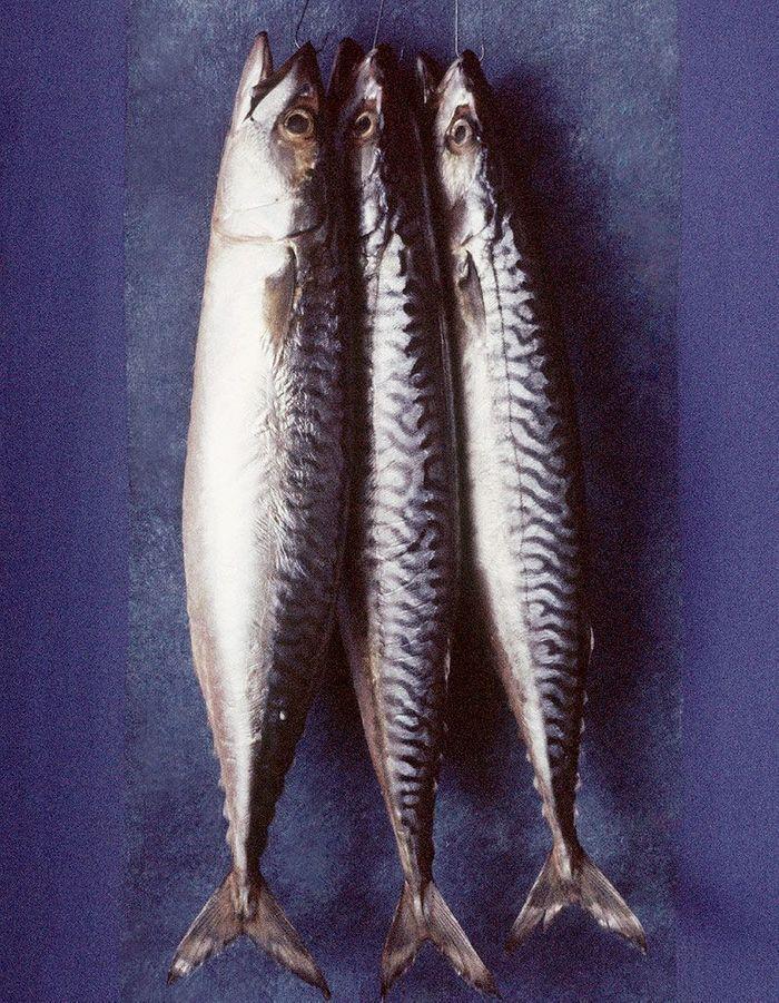 Les viandes et poissons maigres que cuisiner en hiver for Poisson les plus cuisiner
