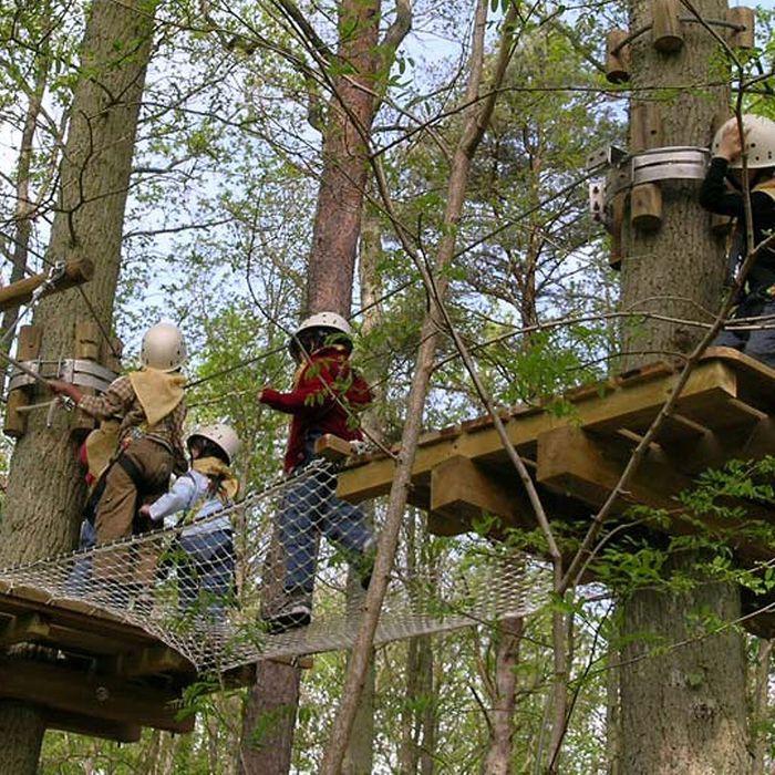 Milly-la-Forêt : une virée nocturne dans les arbres avec Atout Branches