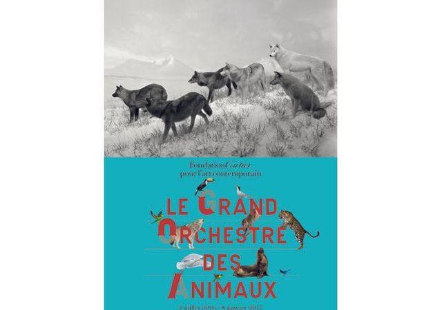 """""""Le grand orchestre des animaux"""" à la Fondation Cartier pour l'art contemporain"""